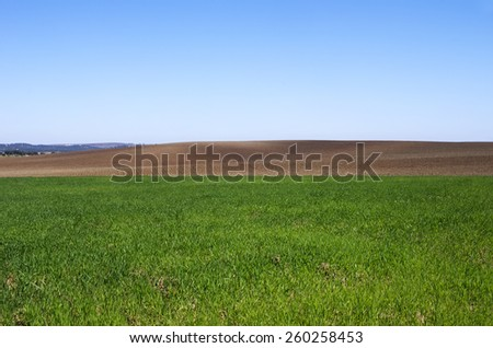 plowed and green field background,Alentejo,Portugal - stock photo