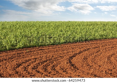 Plowed field and potato crop with sky background - stock photo