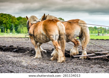 plowing horses on a field - stock photo