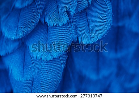 plumage background of bird close up - stock photo