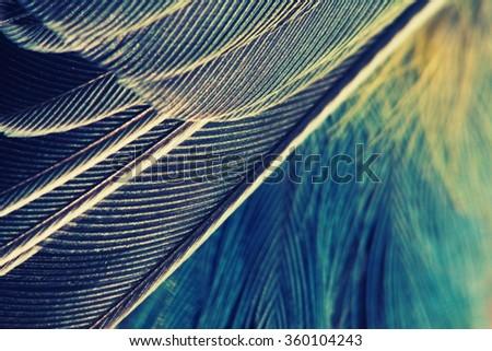 plumage background of bird closeup, vintage effect - stock photo