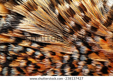 plumage background of Capercaillie closeup - stock photo