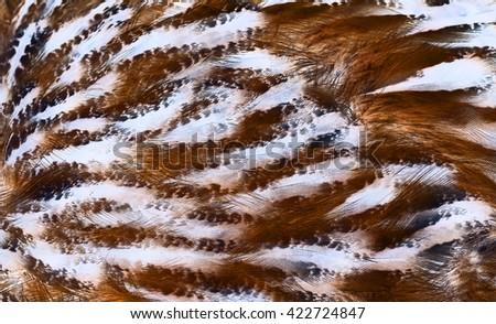 plumage background of magical bird closeup, x-ray effect - stock photo
