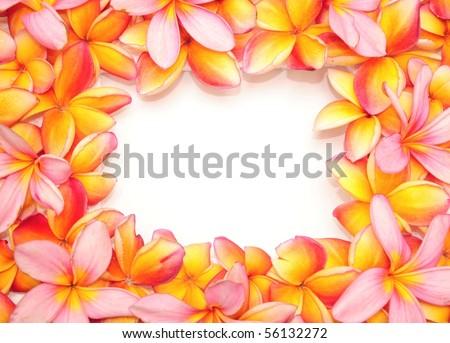 Plumeria flower frame - stock photo
