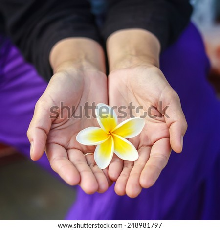 Plumeria flower in woman's hands - stock photo
