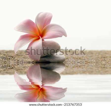 plumeria flower on the stone - stock photo