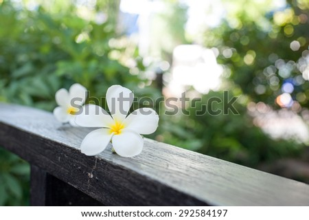 Plumeria Flower on wood ,Defocused tropical flowers frangipani on wood - stock photo