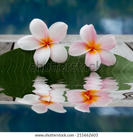 plumeria flowers next to the pool - stock photo