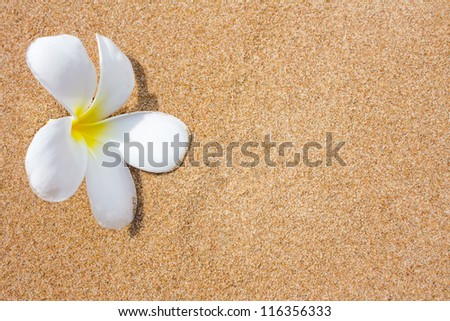plumeria flowers on beach - stock photo