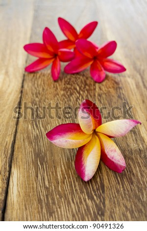 Plumeria flowers on wooden background in shallow DOF - stock photo