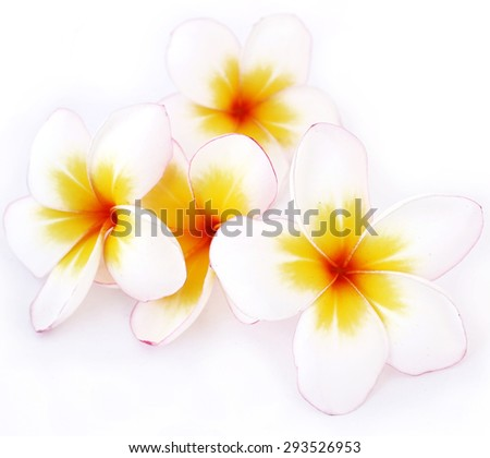 Plumeria flowers, white flowers - stock photo
