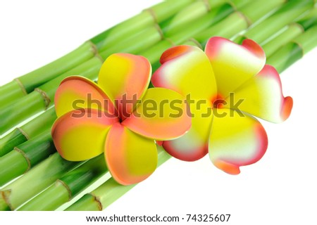 plumeria with bamboo - stock photo