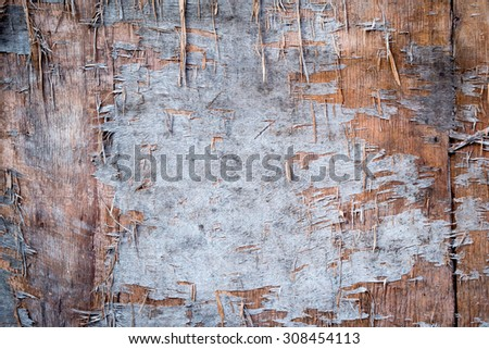 Plywood texture board - stock photo