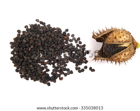 Datura Stock Photos Images Amp Pictures Shutterstock