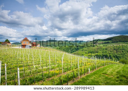 "Podgorjanska wine road, Slovenia - May 2015. Lonely house surrounded by vineyard in Dolenjska region in Slovenia, which is famous for its rose ""Cvicek"".  - stock photo"
