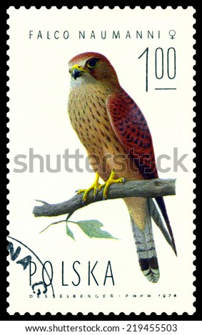 POLAND  - CIRCA 1974 : A stamp printed by Poland shows bird an Falcon  Naumanni female from the series  Falcons, birds of Prey, circa 1974 - stock photo