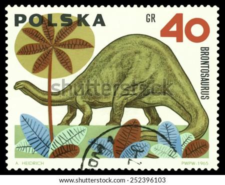 POLAND - CIRCA 1965: A stamp printed  in Poland  shows  dinosaur  Brontosaurus, series  Dinosaurs, circa 1965 - stock photo