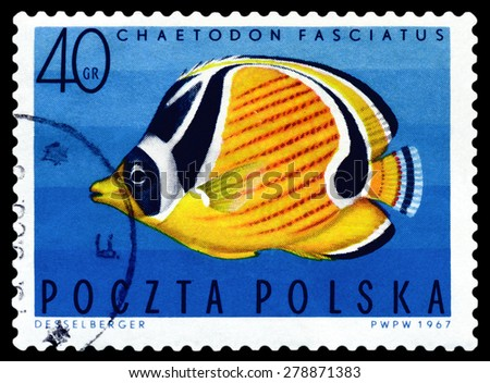 POLAND - CIRCA 1967: A stamp printed in Poland, shows  fish  Barred butterflyfish, from the series Tropical fish, circa 1967  - stock photo