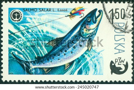 POLAND - CIRCA 1979: A stamp printed in Poland, shows fish Salmon, from the series Centenary of Polish Angling, circa 1979 - stock photo