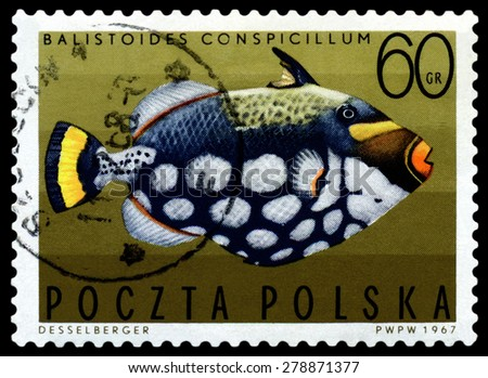 POLAND - CIRCA 1967: A stamp printed in Poland, shows  fish  Spotted triggerfish, from the series Tropical fish, circa 1967  - stock photo