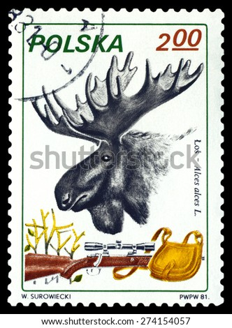 POLAND - CIRCA 1981: A Stamp printed in Poland shows image   Moose, Rifle and Pouch,  series, circa 1981. - stock photo
