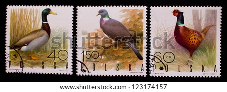 POLAND - CIRCA 1970: A stamp printed in Poland shows three kinds of flying and not wild birds,circa 1970 - stock photo