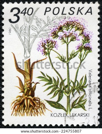 """POLAND - CIRCA 1980: A stamp printed in Poland shows Valeriana officinalis, with the same inscription, from the series """"Medical Plant"""", circa 1980 - stock photo"""