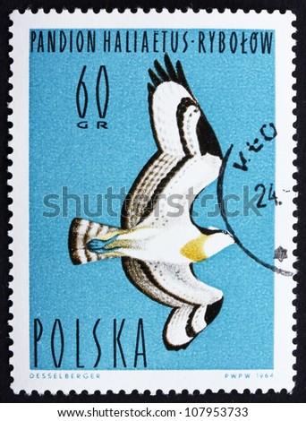 POLAND - CIRCA 1964: a stamp printed in the Poland shows Osprey, Fish Hawk, Pandion Haliaetus, Bird of Prey, circa 1964 - stock photo