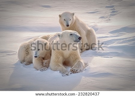 Polar bear and cubs lying on Arctic snow - stock photo