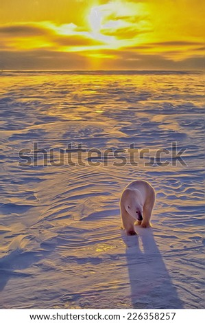 Polar bear at sunset on Arctic tundra - stock photo