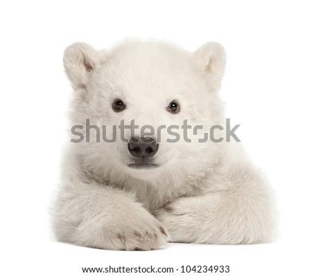 Polar bear cub, Ursus maritimus, 3 months old, lying against white background - stock photo