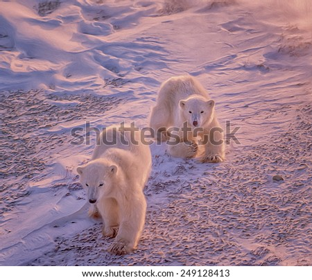 Polar bear cubs, photo art - stock photo