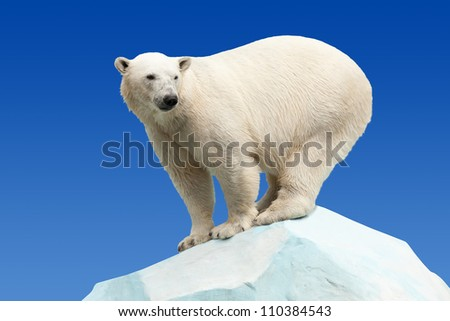 polar bear in wildness area against blue sky - stock photo