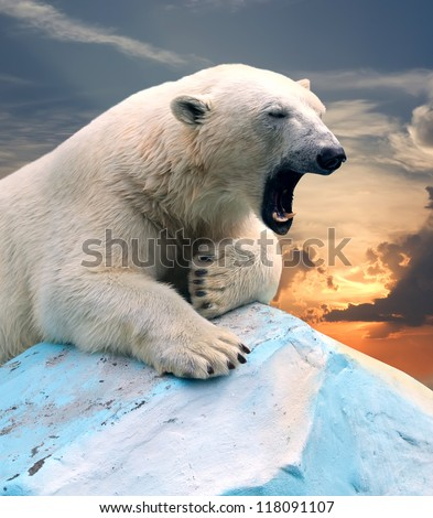 polar bear in wildness area against sunset - stock photo