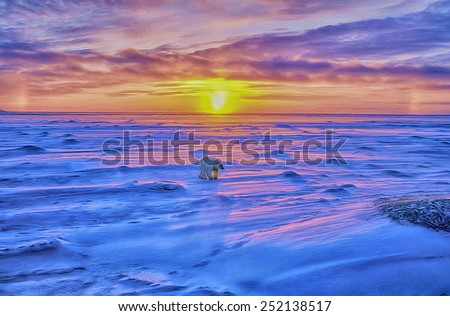 Polar bear on tundra sunset - stock photo