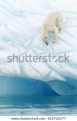 Polar bear Svalbard islands Norway - stock photo