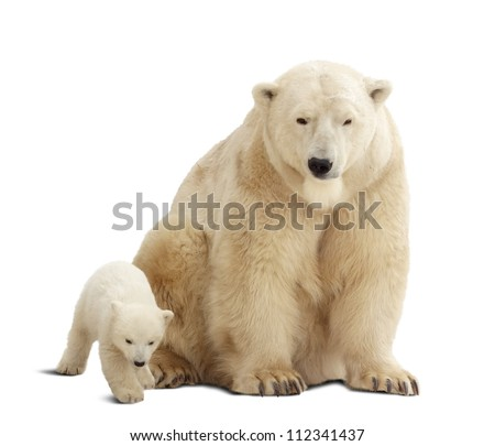 polar bear with baby. Isolated over white background with shade - stock photo