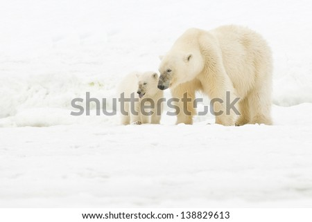 Polar bear with cub - stock photo