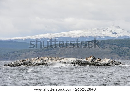 Polar ducks on the rock, Beagle Channel, Tierra del Fuego - stock photo