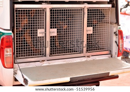 police dogs in cage - stock photo
