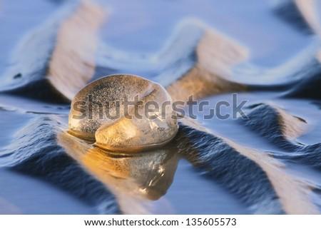 Polinices sordidus leaden sand snail egg mass natvie australian moreton bay marine reserve - stock photo