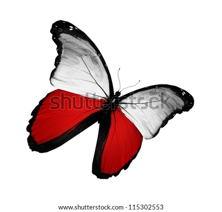 Polish flag butterfly flying, isolated on white background - stock photo