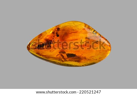polished amber with insect inside - stock photo