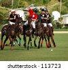 Polo - stock photo