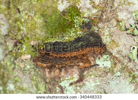 Polypore on wood - stock photo