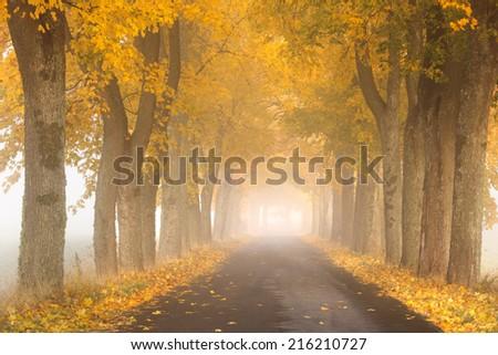 Pomerania, Poland/ Autumn Road. - stock photo