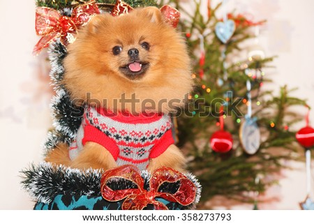 Pomeranian dog. Dog wish Happy New Year. Happy New Year - stock photo