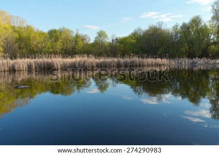 Pond and tree-lined marsh with reeds at nature center in west saint paul minnesota - stock photo