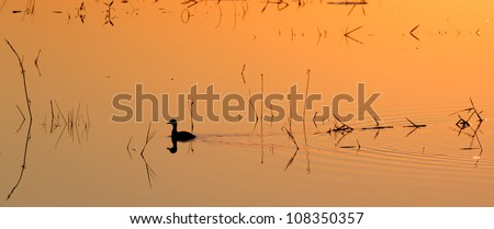 Pond Duckie. A sunset photograph taken from Mafazana Hid in the Isimangaliso Wetland Park. Kwazulu Natal. A world heritage site. - stock photo