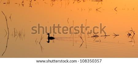 Pond Duckie. A sunset photograph taken from Mafazana Hid in the Isimangaliso Wetland Park. Kwazulu Natal. A world heritage site. - stock photo